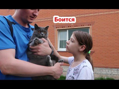 VLOG Гуляем во дворе, Вынесли кота на улицу
