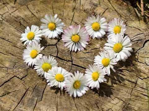 * Любя, тебя благословляю... Стихи Натальи Колопенюк