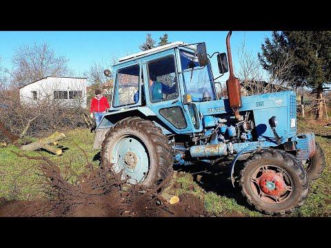 Mtz - Belarus tractor vs tree, pulling 2020 4k