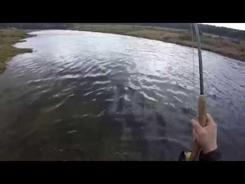 First fresh salmon 2015 river Don