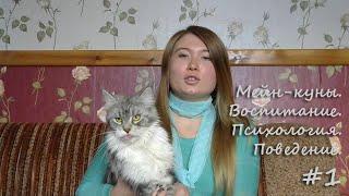 Мейн-кун. Воспитание. Психология. Поведение.(С этого видео начинается цикл о поведении, воспитании, психологии кошек породы мейн-кун. Так же много информ..., 2014-12-10T08:17:33.000Z)