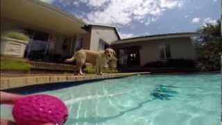 Our Labrador, Jessy, Playing Fetch In The Pool - GoPro Hero 3+