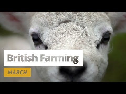 British Farming - 12 Months On A UK Farm: March