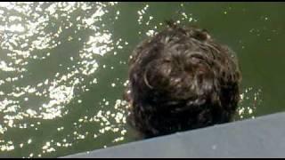 Ricardo salta da ponte d.luis de cabeca.mp4
