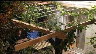 Sichtschutz im Garten mit Rankpflanzen | ToolTown Garten Tipp