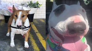 COOL BULL TERRIER DOG MOMENTS
