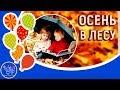 Детская песня про осень Осень в лесу Песни для детей mp3
