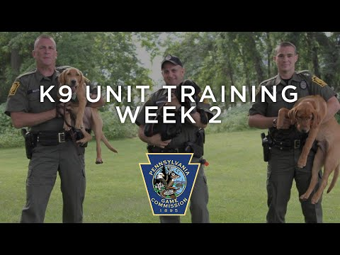 K9 Unit Training - Week 2