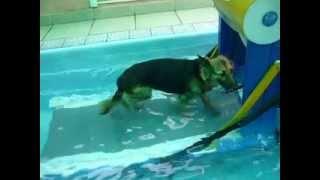 Fisioterapia veterinária - hidroterapia animal - www.fisioanimal.com