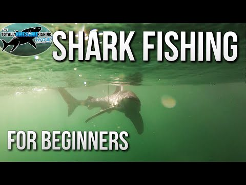Shark Fishing for Beginners | TAFishing