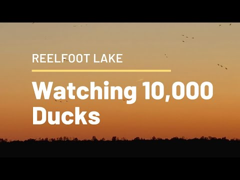 Reelfoot Early Opener