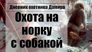 Охота на норку с собакой (лайкой) зима 2017