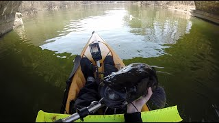 Kayak Fishing for Monster Spring Flathead Catfish in the Schuylkill River