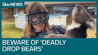 Our reporter pranked into thinking the koala she's holding is a 'deadly drop bear' | ITV News
