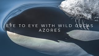 Eye to eye with wild orcas in São Miguel, Azores