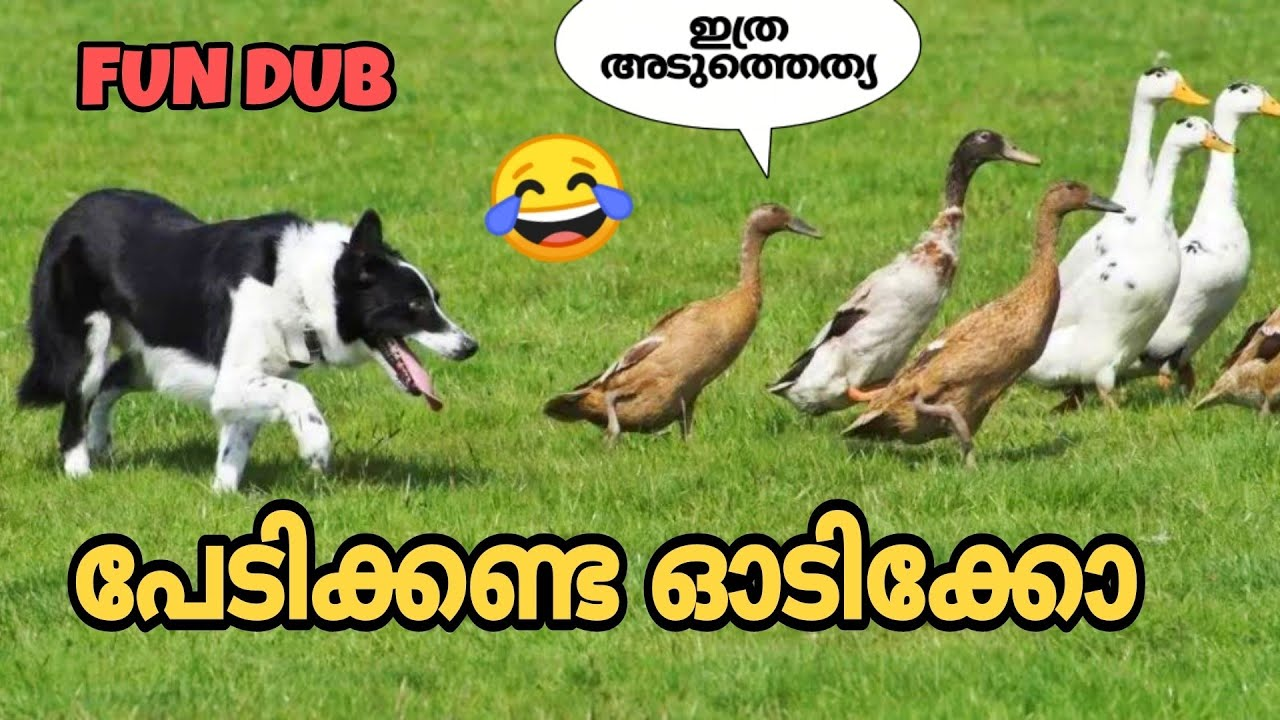 ANIMALS FUN DUB🤣🤣❌️   MALAYALAM FUN DUB   MALAYALAM VINES   DUSTY FOX