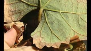varicoză în timpul ovulației cum de a elimina operația varicoasă