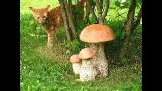 Что с котами из леса ......................
