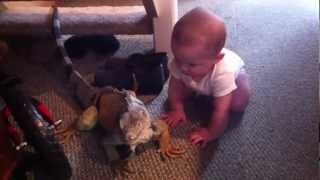 Charlie loves his pet Iguana.