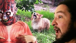 DO YOU KNOW HOW TO MEME? • Behind the Cow Chop