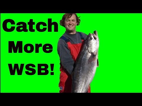 How To Catch White Seabass Part 2