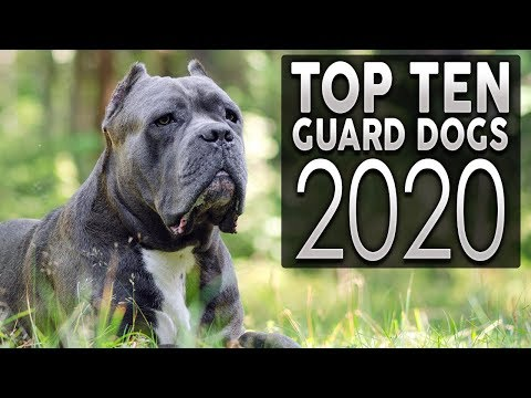 TOP 10 GUARD DOG BREEDS 2020