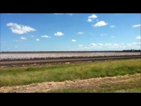 Cottonpicking, ready to harvest, Emerald