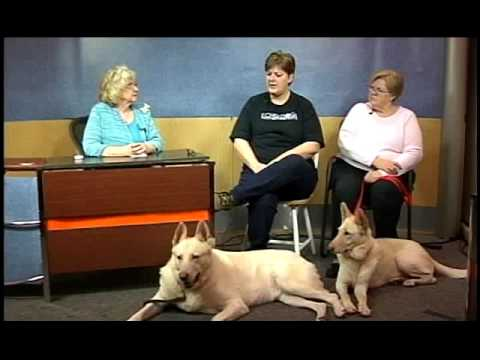 Lets Talk Tailwaggers   Echo Dogs White Shepherd Rescue