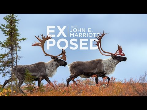 EXPOSED Ep. 4: Searching for Caribou in the Arctic Barren Lands
