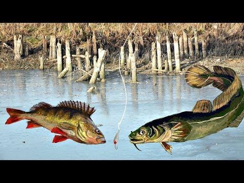 Особенности рыбалки зимой на течении и стоячей воде в декабре!