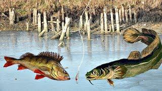 Особенности рыбалки зимой на течении и стоячей воде в декабре