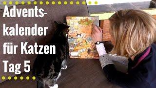 Adventskalender für Katzen Tag 5