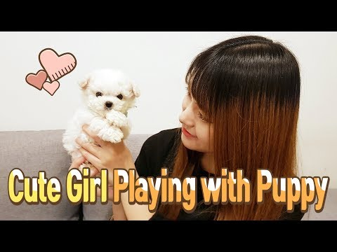 Cute girl playing with puppy Mini Bichon frise - Teacup puppies