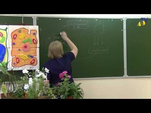 5 Б класс - тема Живые организмы в природе (Перевозникова О.Е.) 2017