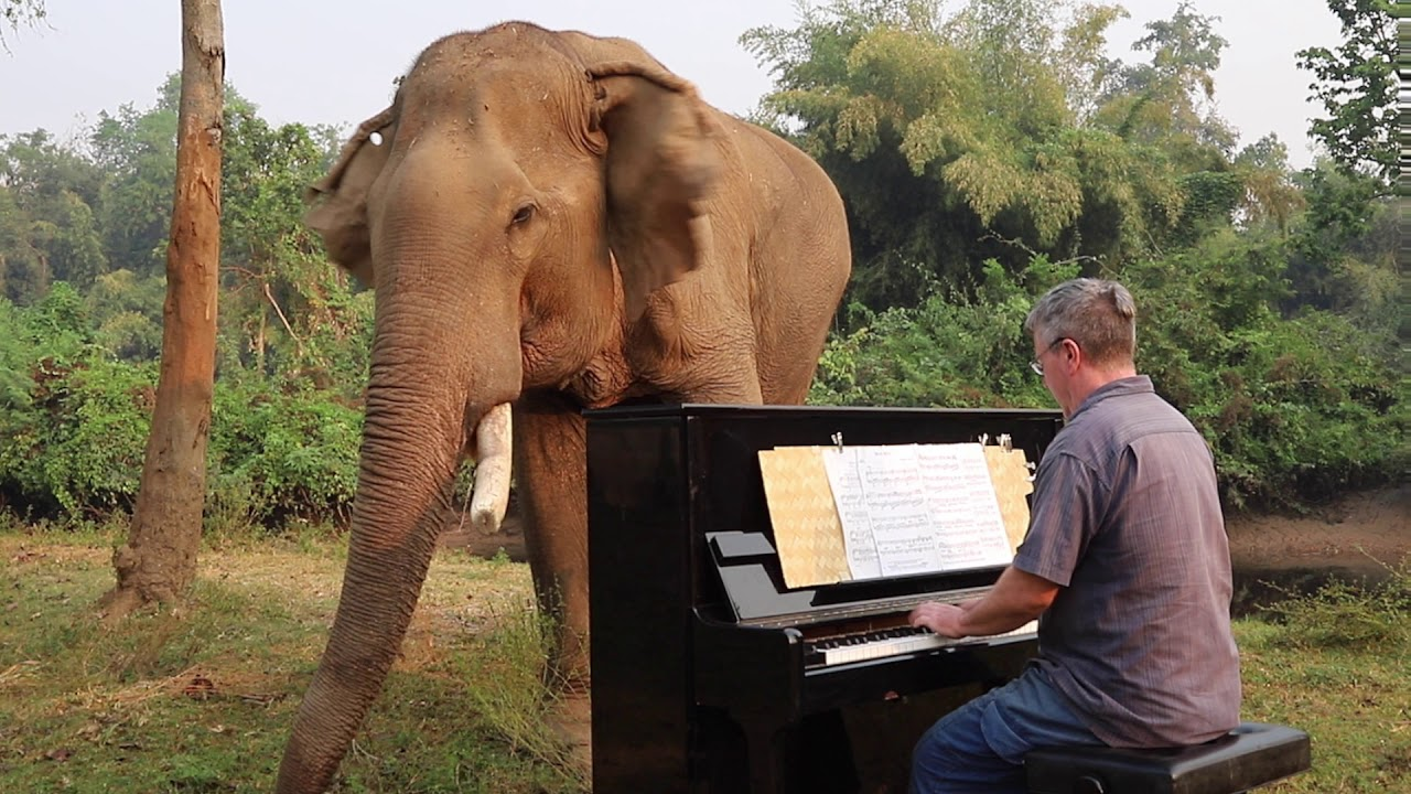 Moon River On Piano For Old Bull Elephant Youtube