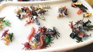 Сортируем животных по группам, дикие животные, лесные животные, морские животные, насекомые.