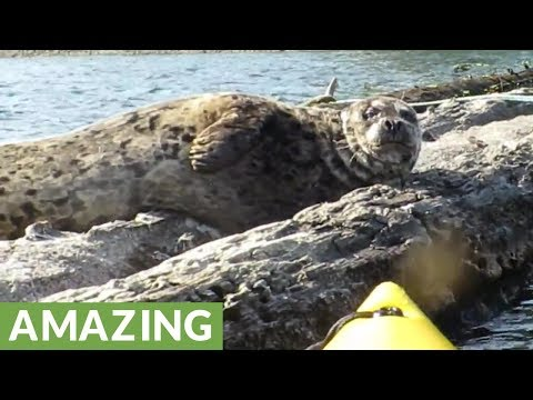 Kayaker waves at sea lion, sea lion waves back!