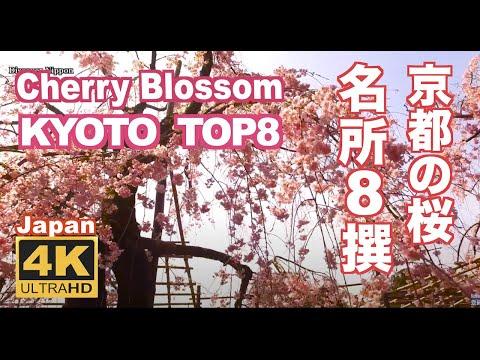 Kyoto cherry blossoms 京都の桜の名所 sakura 京都観光 清水寺 嵐山 二条城 平安神宮 祇園白川 日本の桜 空撮 Google Earth Studio