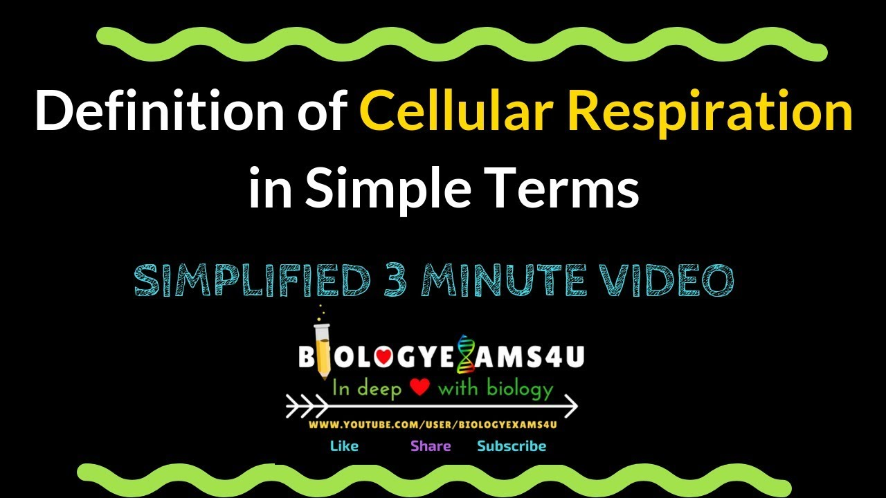 Definition Of Cellular Respiration In Simple Terms Youtube