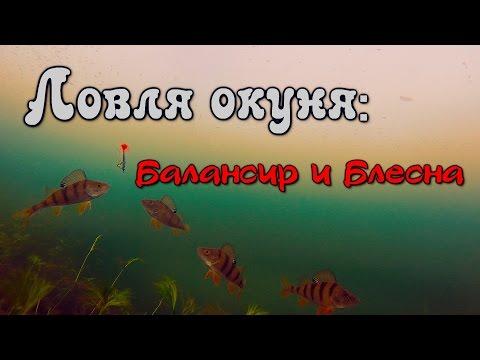 зимняя рыбалка на окуня - 2016-03-28 13:12:19