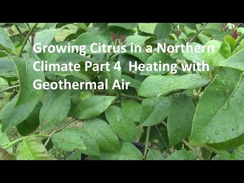 Growing Citrus in a Northern Climate Part 4 Geothermal Proje