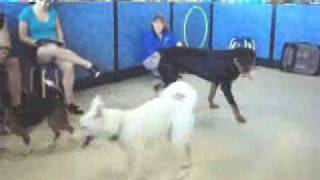 Annabella At Pet Smart's Dog Training Class: Video 1