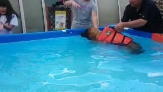 山中湖で初ドッグラン   やっぱりレオンベルガーは泳ぎが得意❗ 恐がって...