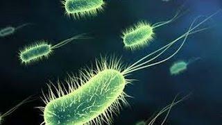 ✓ Historia Documental El Sorprendente Mundo de los Microorganismos