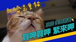 ◖肚臍是隻貓◗ 肚臍吃播首播主打♩
