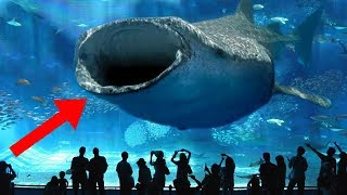 LARGEST Aquariums In The World!