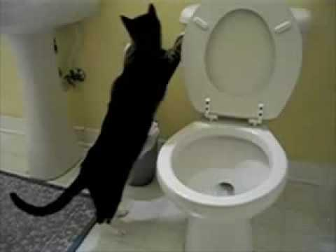 Cat Flushing A Toilet Music Video   Parry Gripp