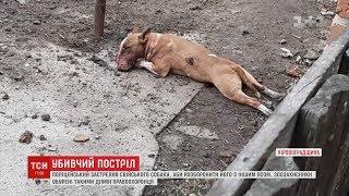 Поліцейський застрелив пса, господарі звинувачують його у жорстокості