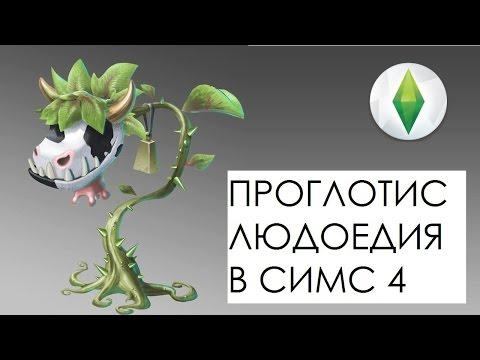 Как вырастить жвачное растение