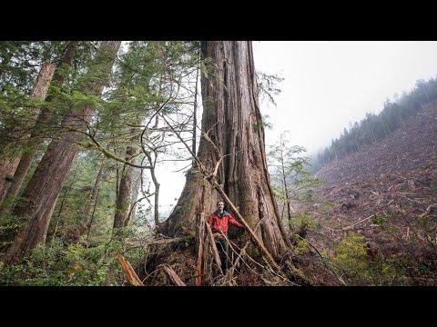 What Will It Take To Save BC's Old-Growth Forests?